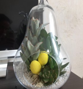 Флорариум мини-садик