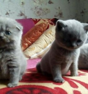 Продаются котята