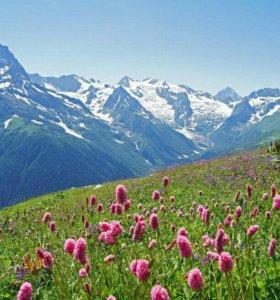 23 июля тур в Домбай На альпийские луга