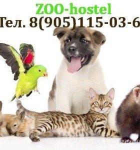 Передержка и зоогостиница для домашних животных
