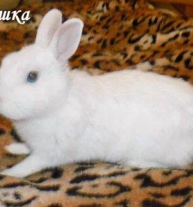 Декоративный кролик от гермелина