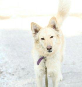 собака Клэр, 3 года из приюта