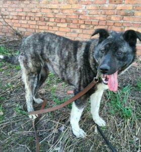 Собака Груня (август 2016) из приюта