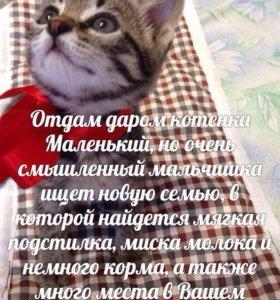 Отдам котят в добрые руки! СРОЧНО!