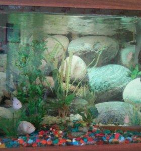Продам рыбок с аквариумом