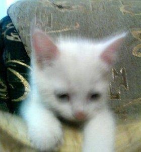 Маленький котенок, мальчик