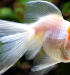 Аквариумные рыбки 6 шт