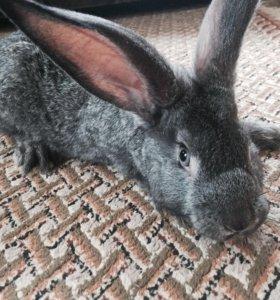 🐰 Кролики