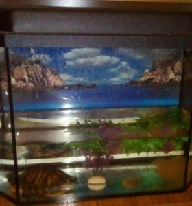 Продам аквариум с подсветкой и черепашку