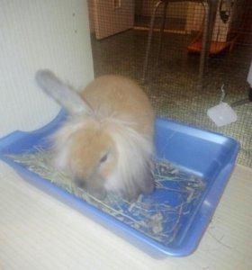Декаративный кролик