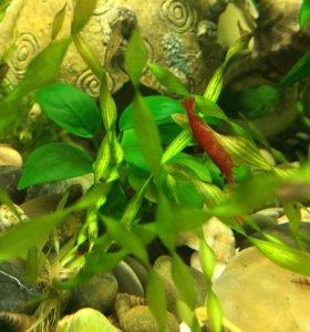 Аквариум 40л с рыбками , растениями и улитками!
