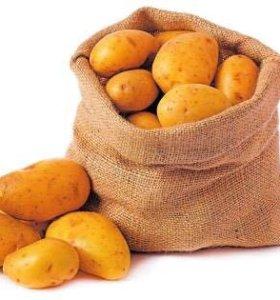 Куплю картофель !