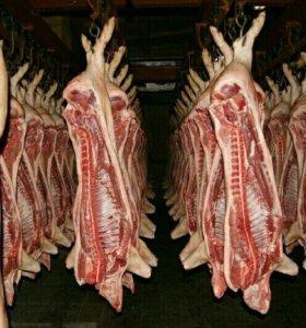 Свинина охладенная в полутушах