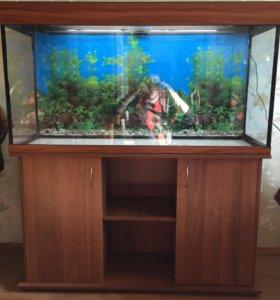 аквариум 300л.