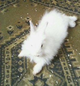 Кролик декоративный. Девочка
