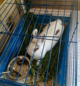 Декоративный кролик ,с клеткой