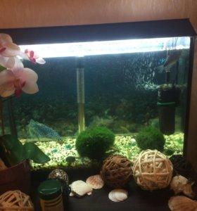 Аквариум с рыбками,с растениями,фильтром