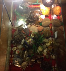 4 Черепахи Красноухих