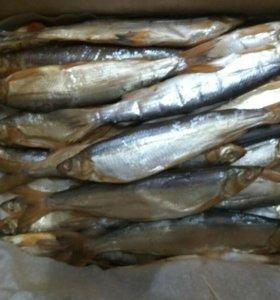 Вяленая рыба разных пород