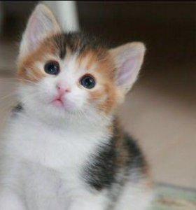 Отдадим котят в добрые руки))