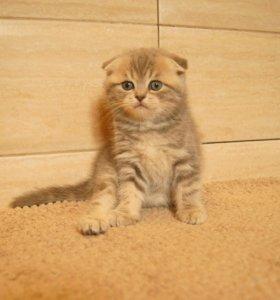 Шикарные котята разных окрасов