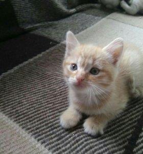 Три милых игровых котёнка 6 недель.