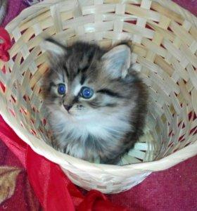 Отдам котят бесплатно!