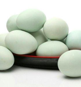 Яйцо утиное
