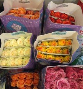 Розы Эквадор, Кения, Голландия