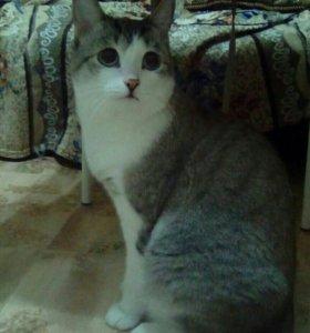 Кота и кошку