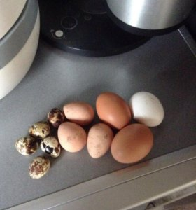 Яйца свежие со своей дачи