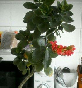 Два красивых цветка