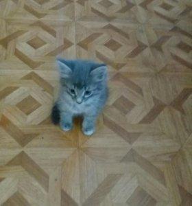 Отдам котеночка