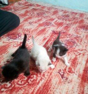 Мальенкие кошки