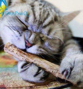 Мятные палочки для котов с кошачьей мятой 🐱