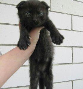 Отдам котят !