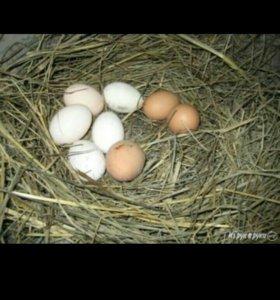 Яйцо деревенское. Еда.