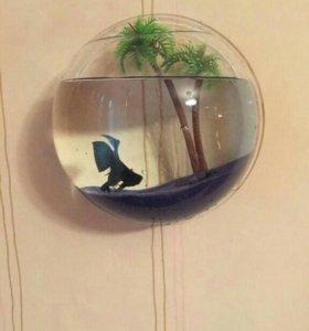 аквариум настенный новый