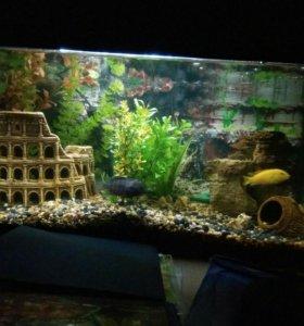 Аквариум 60 литров с рыбами