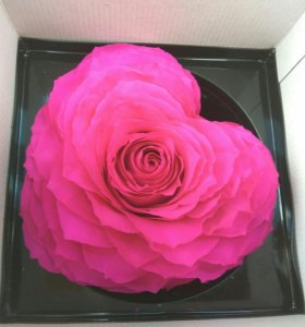 Живая роза в форме сердца