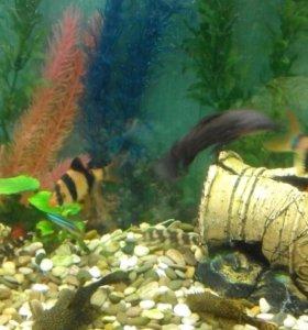 Аквариум с рыбами, грунтом и фильтром