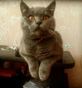 Котик ждёт даму в гости