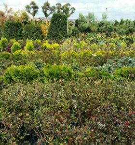 Оптовый склад цветов и благоустройство территорий