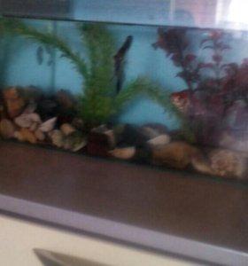 Продам аквариум и все,что в нем