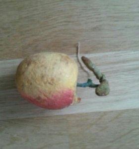 Ёлочная игрушка. Яблоко. Ручная работа. 19 век.