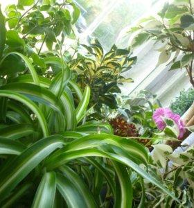 Комнатные растения выращенные своими руками