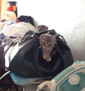 Продаю котят, торг