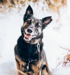 Дуся -собака для души . 8 лет . В добрые руки .