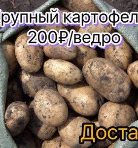Картофель. Доставка