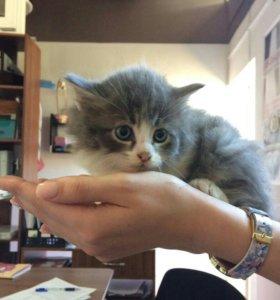 В Брюховецкой,котенок бесплатно.